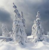 Winter bäume — Stockfoto