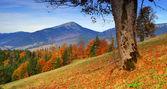 Autumn landscape — Foto de Stock