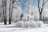 Landschap met besneeuwde bomen — Stockfoto