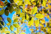 Folhas nos ramos — Foto Stock