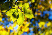 Bright colorful leaves in the autumn forest. — Stock Photo