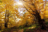Colorful autumn leaves in the forest. — Stock Photo