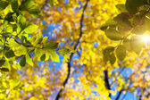 Colorful leaves in the autumn forest. — Stock Photo