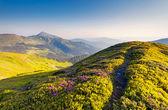 Fantastické slunečný den je v horách — Stock fotografie