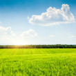 Stock Photo: Sunny day