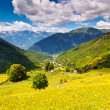 Alpine meadows — Stockfoto