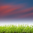 Sunset over field with green grass — Stock Photo
