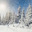 Trees covered with hoarfrost — Stock Photo