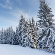 Stock Photo: Trees covered with hoarfrost