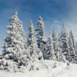 Trees covered with hoarfrost — Stock Photo #32166639