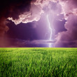 Stock Photo: Lightning in green meadow.