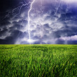 Stock Photo: Storm in green meadow.