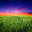 Sunset over field — Stock Photo