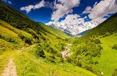 Alpské louky — Stock fotografie