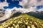 Flower cover up mountain — Stock Photo