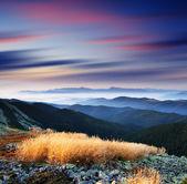 Mountain grass — Stock Photo