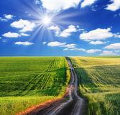 春の緑の野原と美しい青い空 — ストック写真