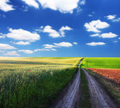 Pole wiosna zielony — Zdjęcie stockowe