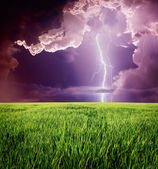 Lightning in green meadow. — Stock Photo