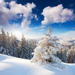 Winter landscape — Stock Photo #34935899