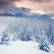 Winter landscape — Stock Photo #34935969