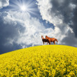 Horses in field — Stock Photo