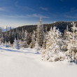 Winter landscape — Stock Photo #34938249