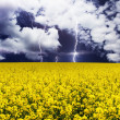 Lightning and field — Stock Photo