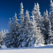 Winter trees — Stock Photo #34938479