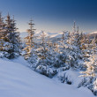Winter landscape — Stock Photo #34938579