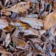 Foliage background — Stock Photo