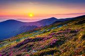 Rhododendron blommor i bergen — Stockfoto