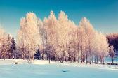 Winter landscape in Ukraine — Stock Photo