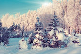 Fantastic winter landscape — Stock Photo