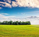 Slunečný den v poli s oblohou — Stock fotografie