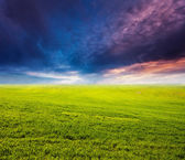 Green field at sunset — Stock Photo