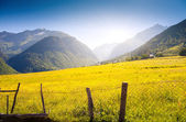 Alpine meadows in village Zhabeshi — Stock Photo