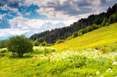 View of alpine meadows — Stock Photo