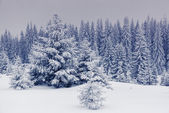 Fantastic winter landscape. — Stock Photo