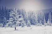Fantastische winterlandschap. — Stockfoto