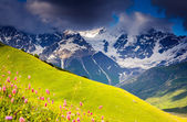 Beautiful alpine meadows — Stock Photo