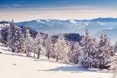 Carpathian winter landscape — Stock Photo