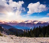 Sunny day in Carpathian mountains — Stock Photo
