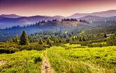 Fantastic morning Carpathian mountains — Stock Photo