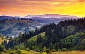 Carpathian green hills — Stock Photo