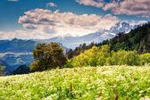 Mountain landscape of georgia — Stock Photo