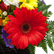 Red Gerbera flowers — Stock Photo