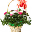 Beautiful bouquet of colorful spring flower in a basket isolated on white. — Stock Photo #39705015
