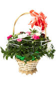 Beautiful bouquet of colorful spring flower in a basket isolated on white. — Foto Stock
