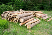 Freshly chopped tree logs stacked up on top of each other in a pile. — Stock Photo